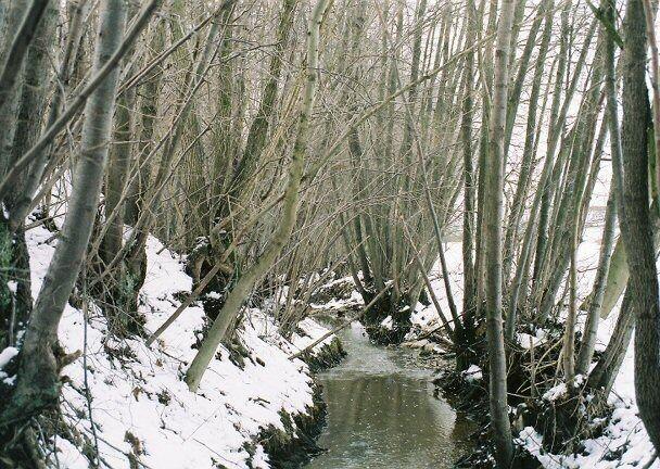 Creek running through the woods